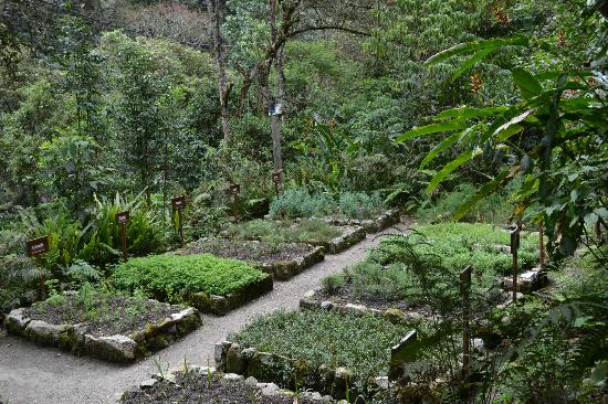 The garden at Inkaterra Machu Picchu Pueblo Hotel