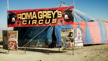 The local circus