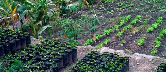 The green native farm at Inkaterra